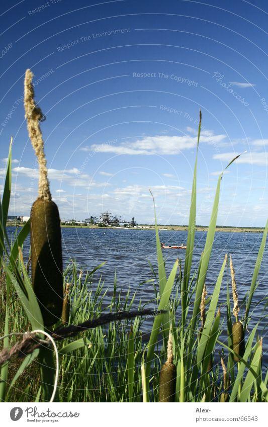 Kolbenfresser Wasser Himmel grün blau Pflanze Sommer Freude Wolken Gras See Wärme Feste & Feiern Physik Schwimmen & Baden Konzert