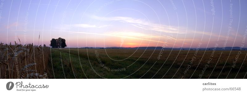 Schlafstörungen 2 blau Sommer Horizont Rücken groß Panorama (Bildformat) Sonnenaufgang Kondensstreifen Morgen Mensch Wäldchen orange-rot