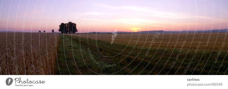 Schlafstörungen 3 Sommer Sonnenaufgang Morgen Wäldchen Panorama (Aussicht) Horizont Kondensstreifen orange-rot Morgendämmerung Rücken blau