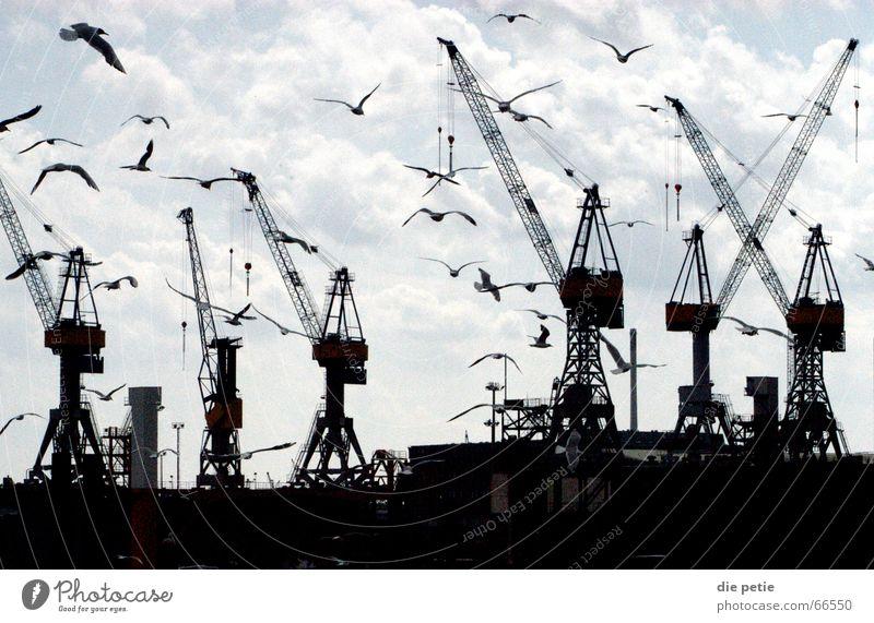 fischmarkt Kran Möwe unheimlich Hafen Himmel Hamburg Kontrast