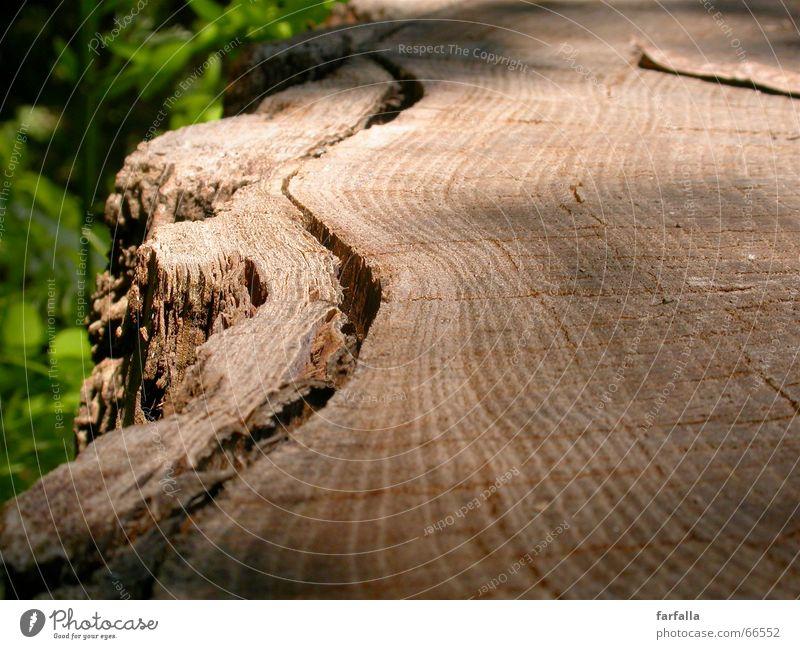 Auf dem Holzweg... Baum grün Blatt Wald Wege & Pfade braun Baumstamm Baumrinde Schichtarbeit vielschichtig