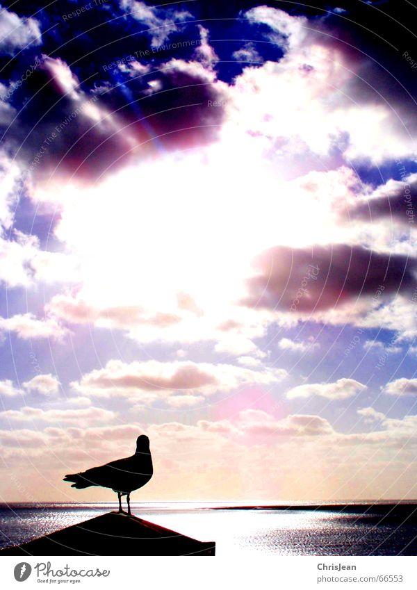 Titellos Erholung Sonne Strand Meer Insel Spiegel Gemälde Tier Himmel Wolken See Bekleidung fliegen genießen schlafen stehen träumen Gefühle Sehnsucht