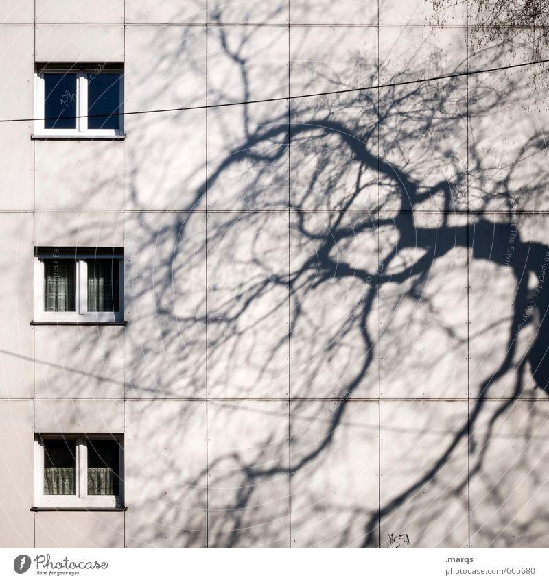 Schattig Häusliches Leben Herbst Baum Ast Gebäude Architektur Mehrfamilienhaus Fassade Fenster bedrohlich einfach Stimmung ästhetisch Stadt Wohnungssituation