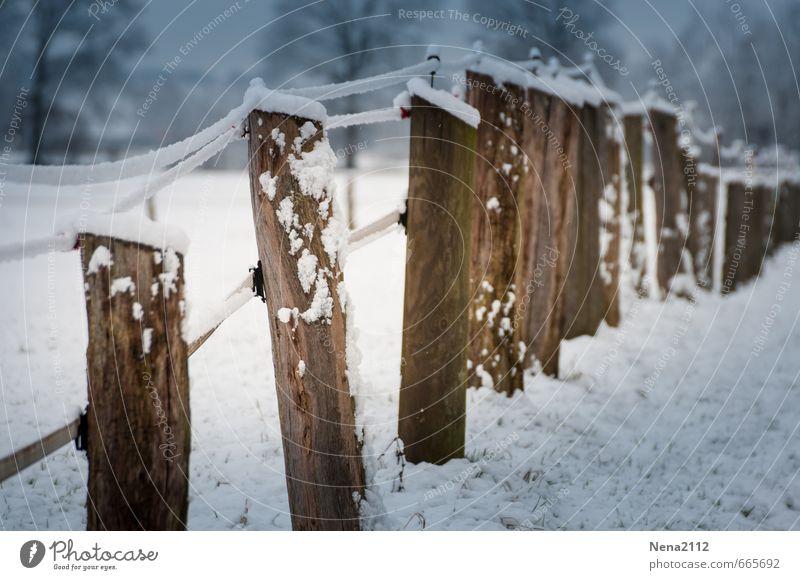 Wetter | Grenze Natur Winter kalt Schnee Holz Eis Feld Klima nass Schutz Sicherheit Frost Barriere schließen