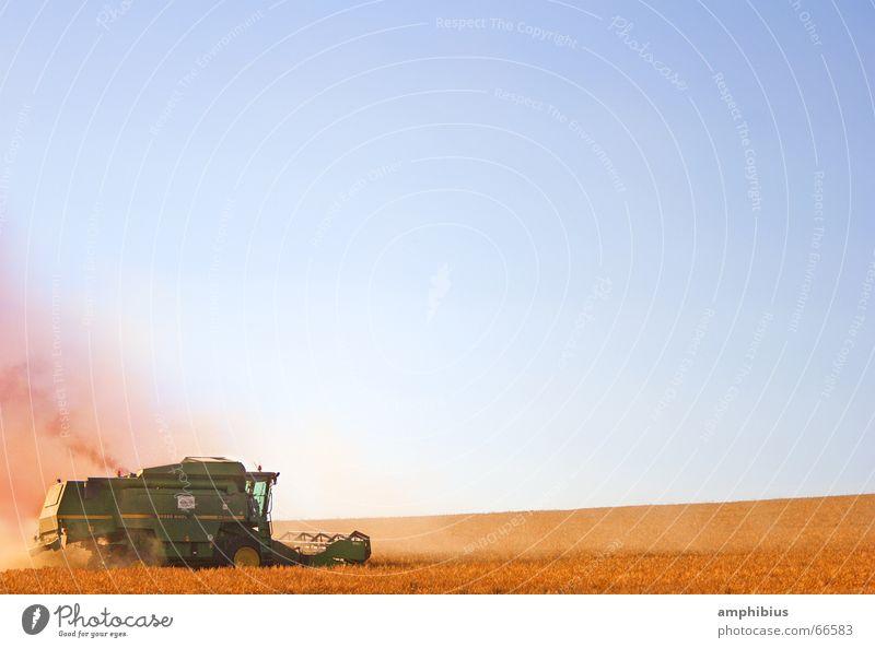 Das Schicksal essbar zu sein ... Arbeit & Erwerbstätigkeit Feld Idylle Landwirtschaft Dorf Getreide Ernte Landwirt Amerika Bayern Weizen Ähren Landleben Mehl Franken Granulat
