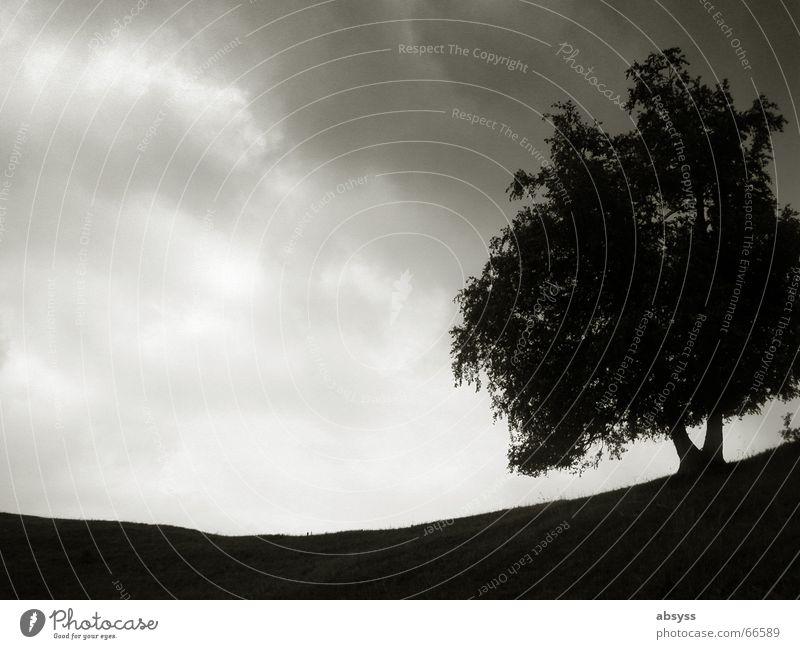 Round a Baum Natur ruhig Wolken Einsamkeit dunkel grau Landschaft Wetter Erde Bodenbelag trüb Wurzel Grauwert Licht & Schatten