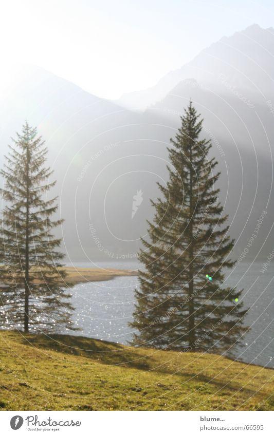 thannheimer tal Licht Wiese See Abenddämmerung schlechtes Wetter Tanne Nadelbaum Gras Gewässer Lichteinfall wandern Tannheimer Tal ruhig Erholung Außenaufnahme
