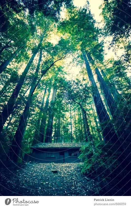 Cabin in the Woods Natur Ferien & Urlaub & Reisen blau Pflanze Sommer Baum Einsamkeit Erholung Landschaft Blatt Ferne Wald Umwelt Freiheit Wetter wandern