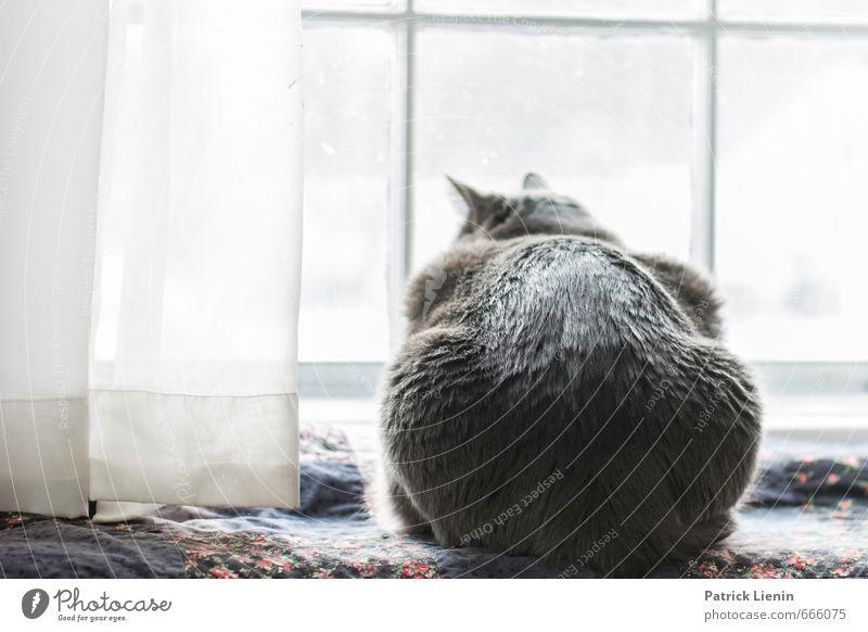 busy life Katze schön Erholung ruhig Tier Erotik Umwelt Leben feminin Glück Lifestyle elegant Zufriedenheit niedlich einfach weich