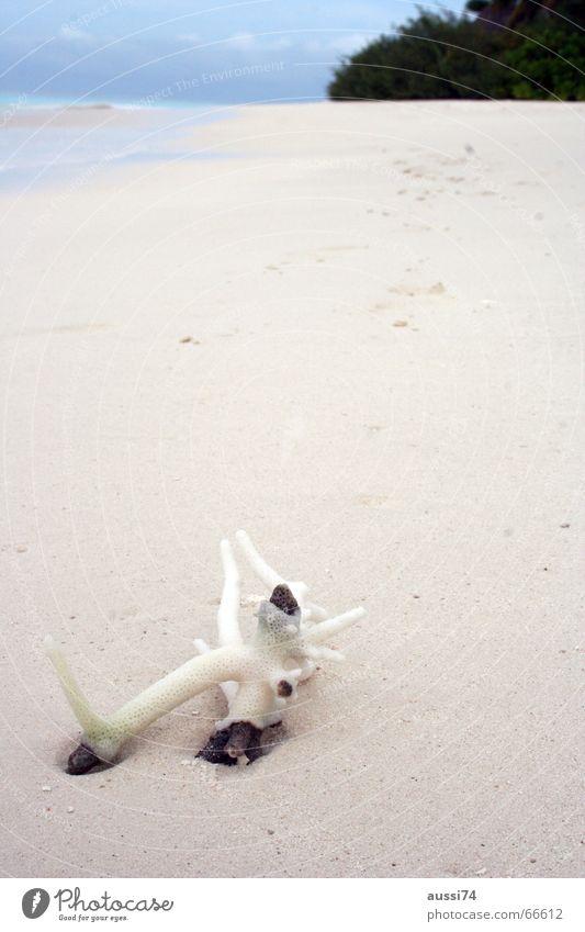 Strand-Koralle Natur Wasser Meer Strand Einsamkeit träumen Sand hell Insel Korallen