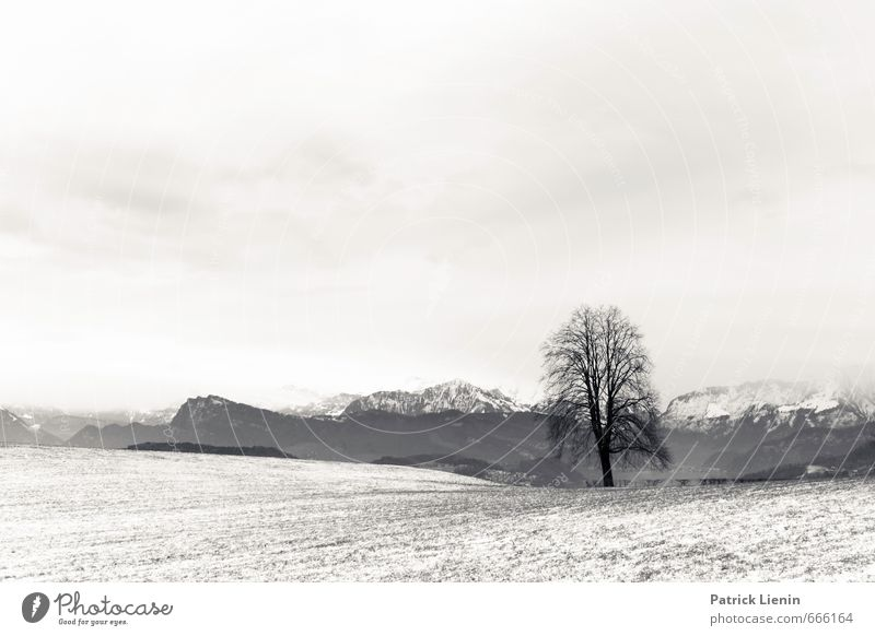 Allein gelassen Umwelt Natur Landschaft Luft Himmel Wolken Winter Schnee Schneefall Pflanze Baum Wald Alpen Berge u. Gebirge Gipfel Schneebedeckte Gipfel