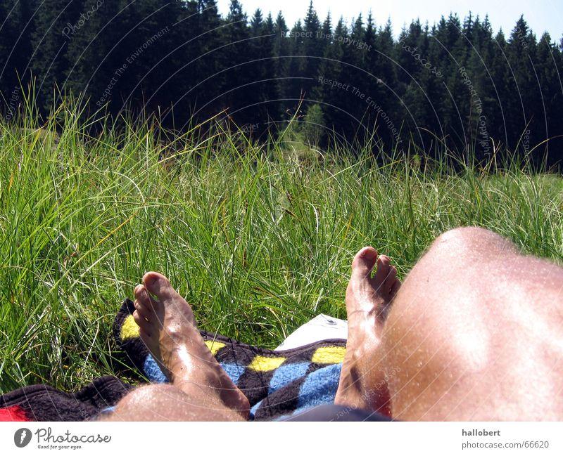 Am Vogtlandsee 01 Sonne Wald Wiese Beine Liegewiese Sachsen Waldsee