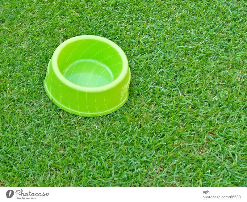 Es grünt so grün . . . Wiese schlafen Mittagspause Müdigkeit Durst Erschöpfung Fressnapf