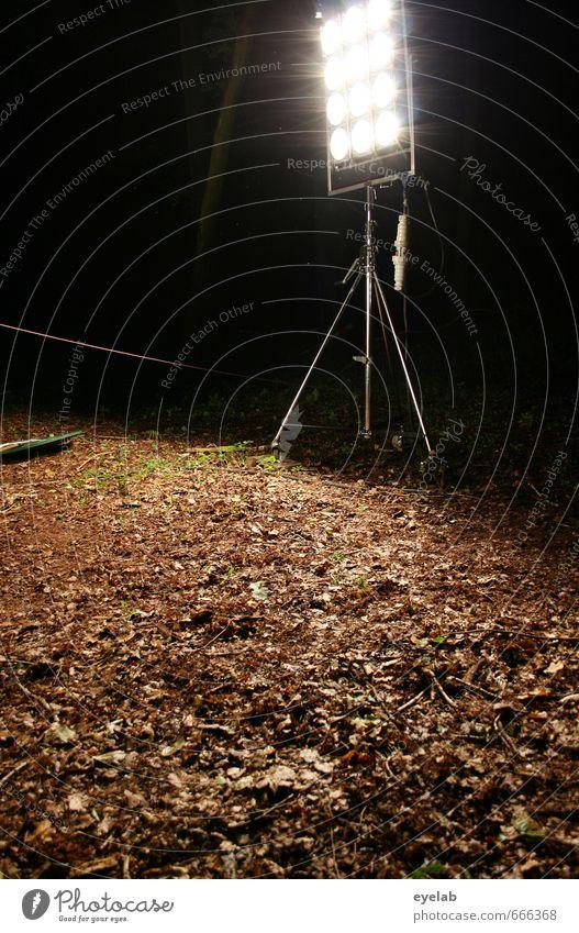 Laterne Laterne... Natur Pflanze weiß Landschaft Blatt dunkel Wald Umwelt Herbst Beleuchtung Garten Kunst braun hell Park Energiewirtschaft