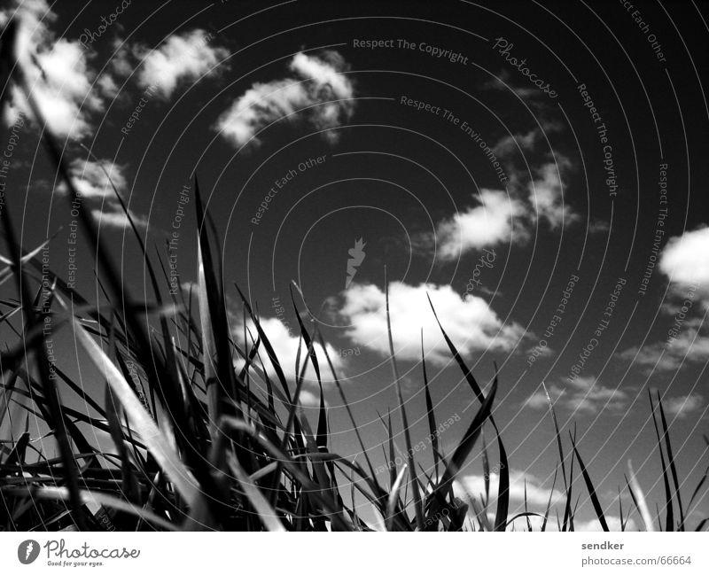 Der Himmel über Dresden Wolken Wiese Gras Außenaufnahme Schwarzweißfoto Freiheit Ferne