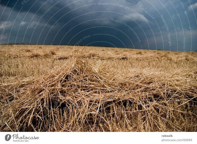 Sturm zieht auf Getreide Umwelt Natur Himmel Wolken Gewitterwolken Horizont Herbst Klimawandel schlechtes Wetter Unwetter Regen Feld bedrohlich dunkel blau gelb