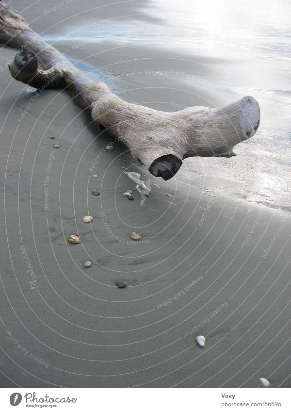 Strandgut Meer Strand Holz Sand Baumstamm Neuseeland Strandgut