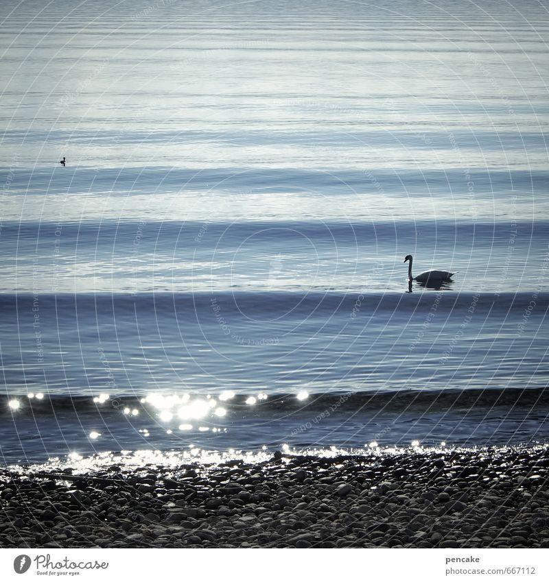 eine wellenlänge Frühling Schönes Wetter Wellen Seeufer Bodensee Tier Schwan 2 Wasser Zeichen ästhetisch weich blau Wellenlänge glänzend Steinstrand