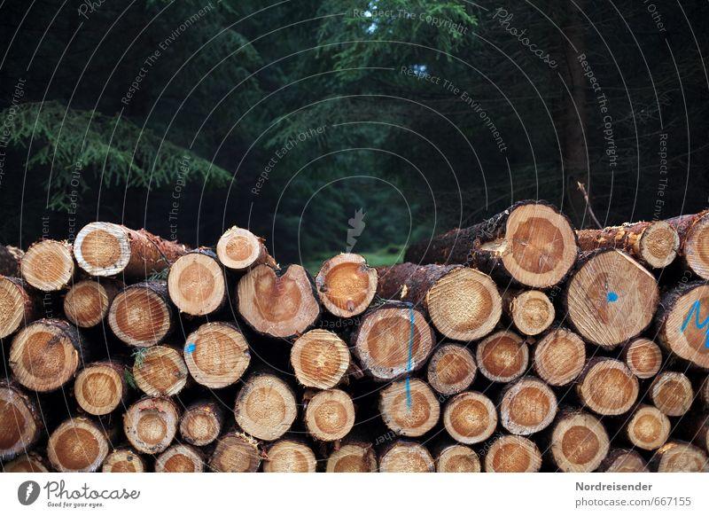 Holzernte Pflanze Baum Wald Holz Arbeit & Erwerbstätigkeit Wandel & Veränderung Landwirtschaft Beruf Ernte Forstwirtschaft Hemmungslosigkeit Holzstapel