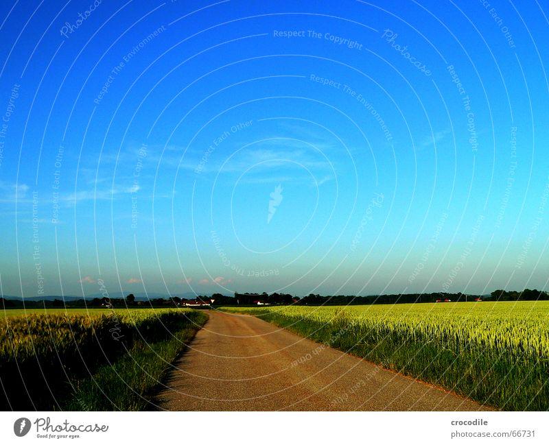 weg ins blaue Feld Sommer Weizen Roggen grün Wolken Straße Wege & Pfade Korn graß Himmel