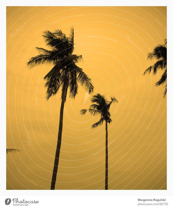 sunset Palme Sonnenuntergang Süden Strand Thailand träumen Miami orange cocos Wind