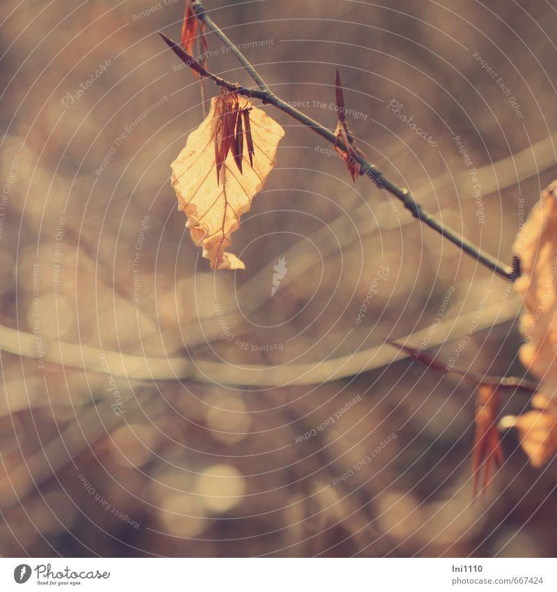 letzter Halt Natur schön Pflanze Blatt schwarz kalt Wald gelb Gefühle Tod Frühling grau braun Stimmung orange ästhetisch
