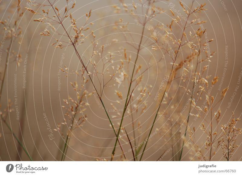 Dunst Natur schön Sommer ruhig gelb Wärme Gras gold Nebel weich Physik feucht Halm Schwäche Pollen Rauschen