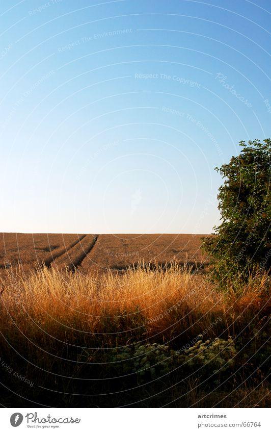Feiheit Himmel Sommer Landschaft Horizont Getreide klassisch Dreiklang