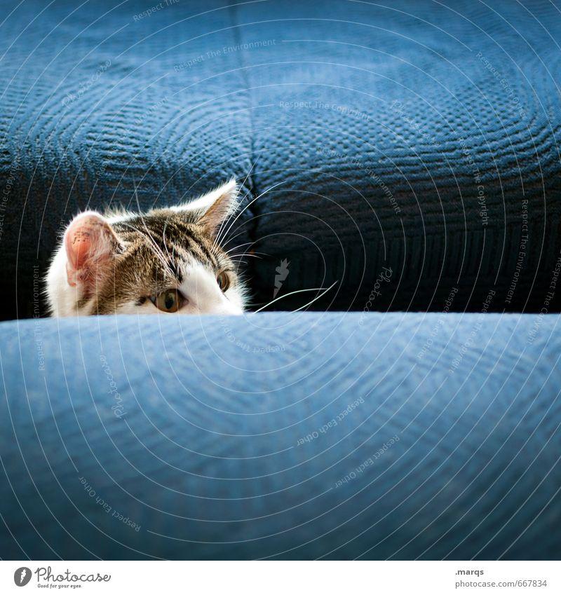 Neugier Häusliches Leben Sofa Tier Haustier Katze Tiergesicht 1 Tierjunges beobachten Blick frech niedlich Mut Interesse Erwartung Schnurrhaar Ohr Auge Versteck