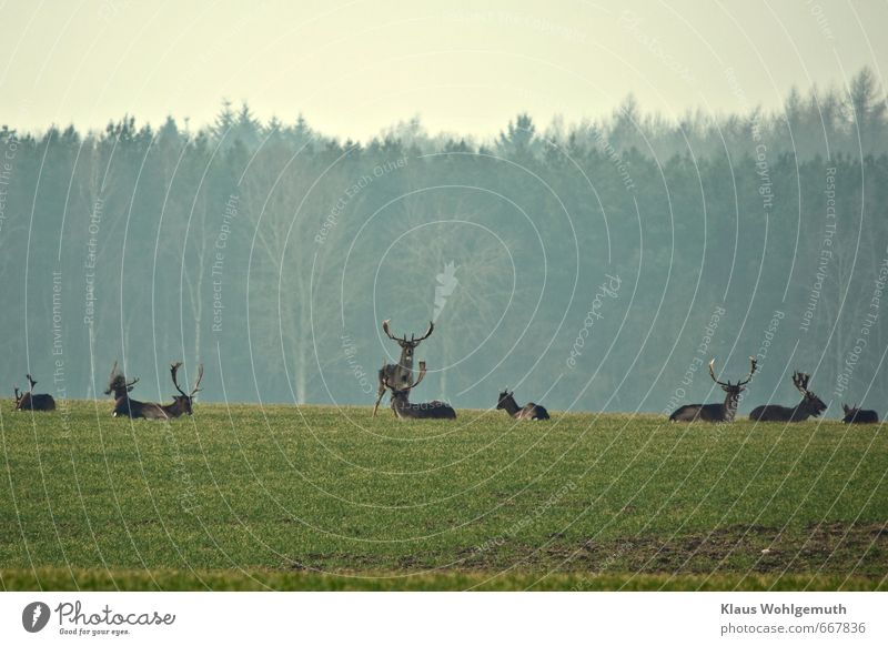 Siesta Natur blau grün Pflanze Tier Umwelt Frühling grau braun Horizont liegen Wildtier Tiergruppe Fell Jagd Fressen