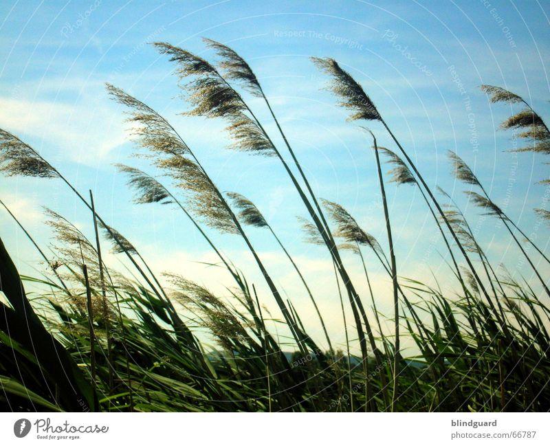 Dust In The Wind Natur Himmel Sonne grün blau Sommer Ferien & Urlaub & Reisen Wolken Erholung Gefühle Gras Bewegung Freiheit Luft Stimmung Wind