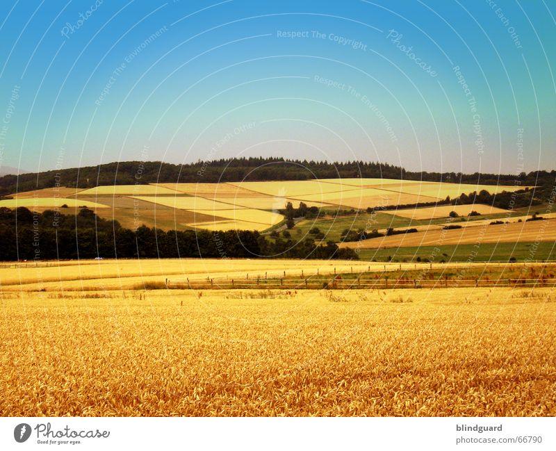 Landschaftsmaler Feld Ferne Sommer Wald Weizen Grenze Ähren Himmel Berge u. Gebirge gold Teilung Natur sommerluft 150 Korn Getreide field sky colorful colors