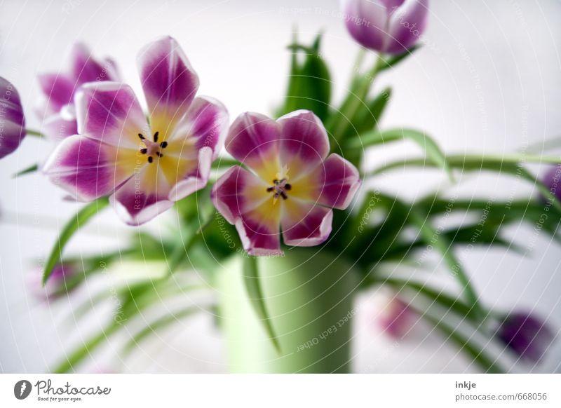 Tulpen schön grün Sommer Blume Gefühle Frühling Blüte Stil Stimmung rosa Häusliches Leben Dekoration & Verzierung frisch Blühend rein Blumenstrauß