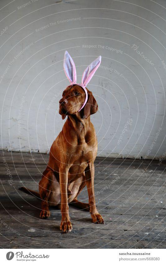 STUDIO TOUR | Ben Vierohr Hund Freude Tier Feste & Feiern außergewöhnlich braun Party rosa sitzen warten niedlich Coolness Ostern Fell Karneval brünett