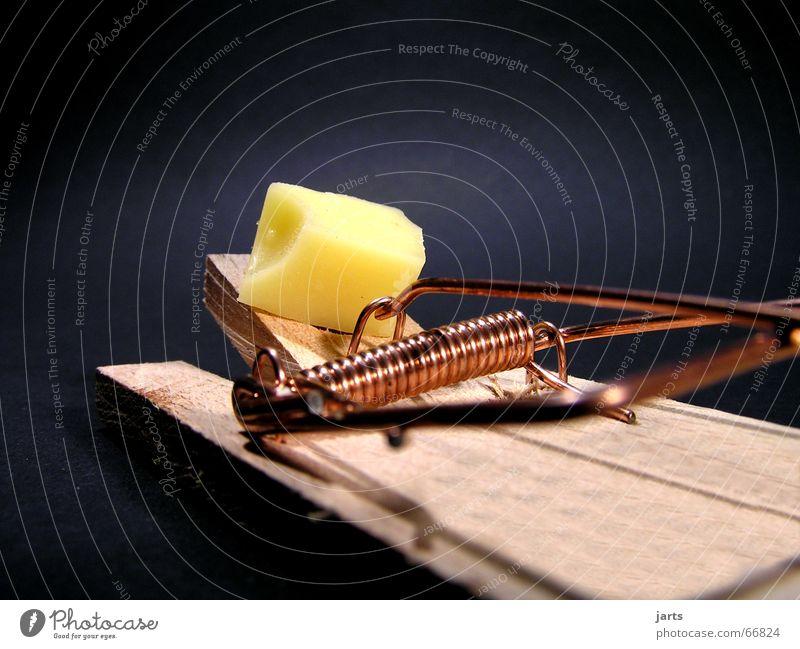 Alles Käse Haus Tod gefährlich Jagd Maus obskur Käse Hinterhalt Nagetiere Falle Mausefalle