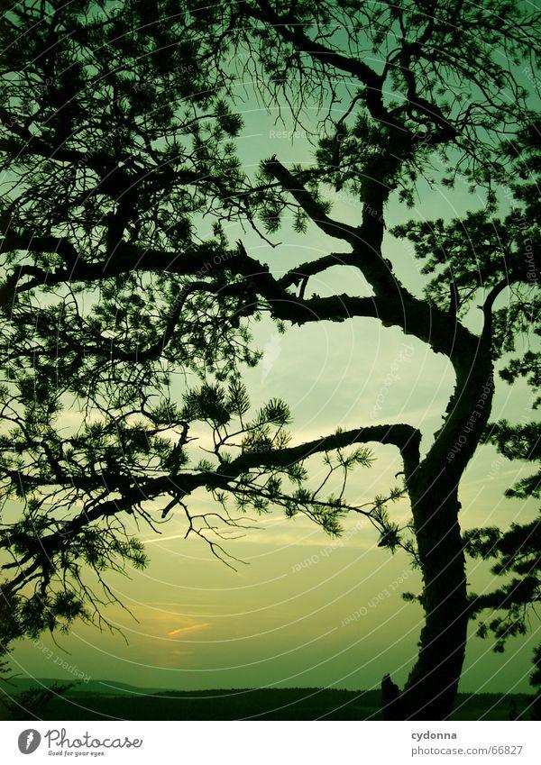 Nachtschicht Natur Himmel Baum grün Sommer ruhig Graffiti Stimmung Beginn Ende Ast wahrnehmen Himmelskörper & Weltall Färbung Sommertag