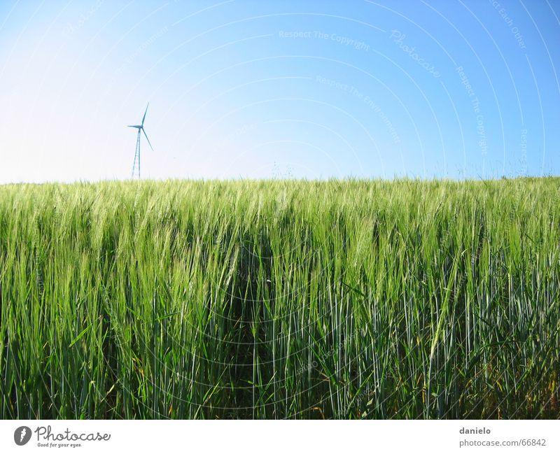 Energie Natur Himmel Sonne grün Sommer ruhig Feld Wind Energiewirtschaft Wachstum Wissenschaften Windkraftanlage Korn Reifezeit