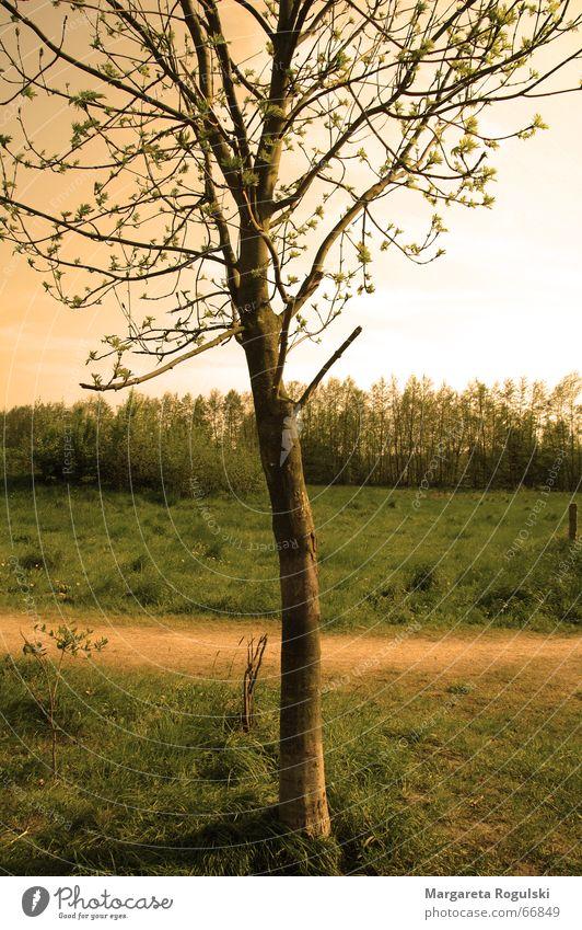 baum Baum Herbst Wiese Gras Wege & Pfade Wärme Feld Physik Sommerabend
