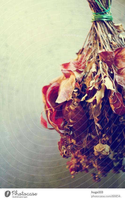 Blumenstrauß (trocken) hängend vor Wand 2 Trockenblume Rose Dachboden Luke Trauer Stillleben heiß Schnur Traurigkeit Dekoration & Verzierung drying flowers
