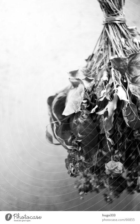 Blumenstrauß (trocken) hängend vor Wand 3 Trockenblume Rose Dachboden Luke Trauer Stillleben heiß Schnur Traurigkeit Dekoration & Verzierung drying flowers