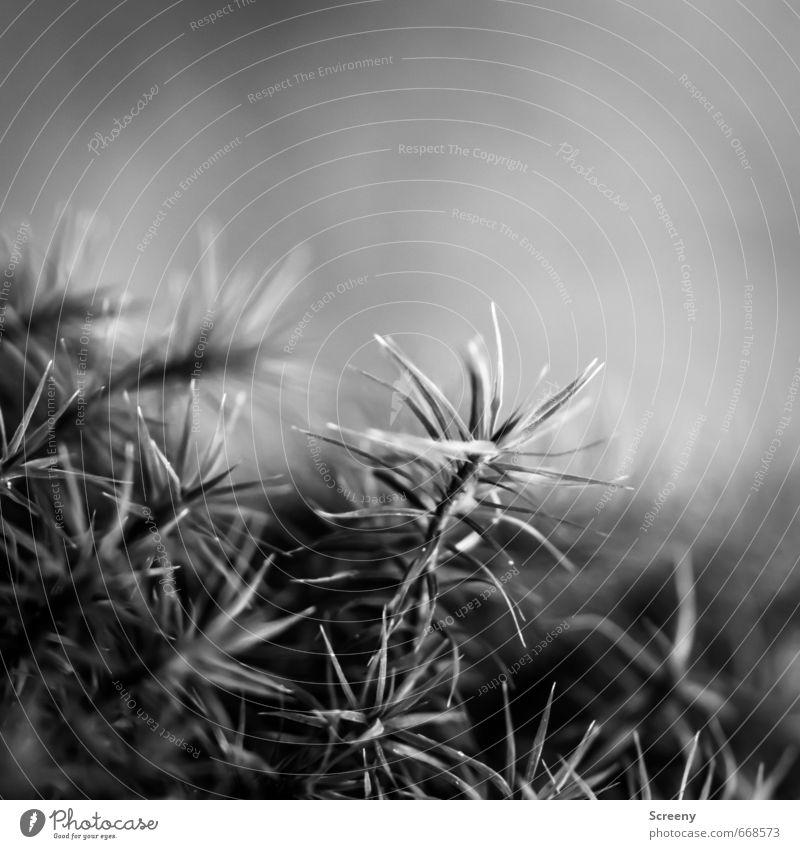 Im Walde... Natur Pflanze ruhig Wald Idylle Wachstum weich Gelassenheit Moos geduldig Wildpflanze