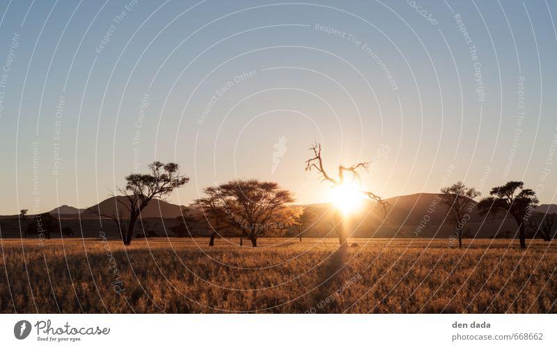 sonnenaufgang in der Namib Natur Ferien & Urlaub & Reisen Sommer Sonne Landschaft Blume Ferne gelb Berge u. Gebirge Freiheit Sand hell Felsen braun Horizont Sträucher