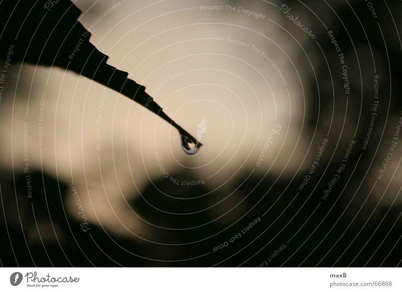 Einsamer Tropfen Natur Wasser Blatt Regen Wassertropfen Spiegel