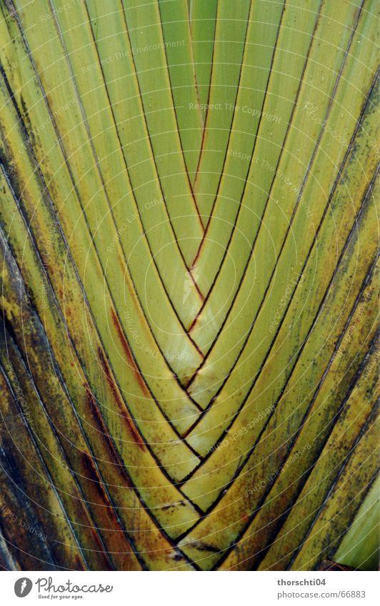 Verwoben Natur grün Pflanze Netz Urwald Palme Gitter netzartig