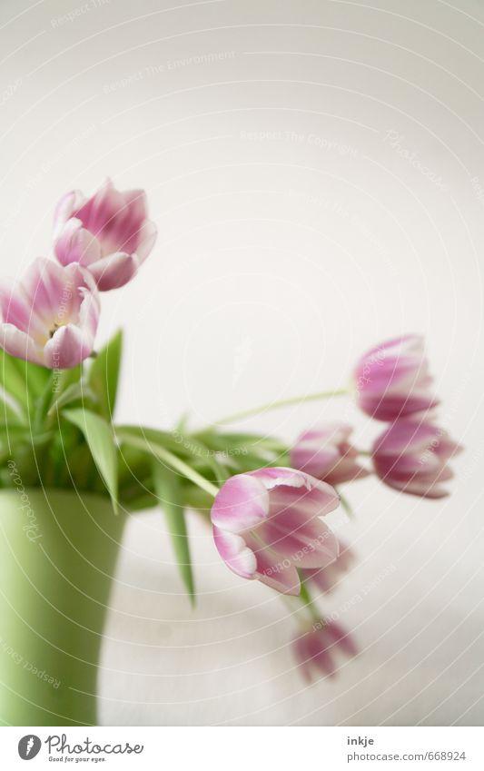 Tulpen Stil Häusliches Leben Dekoration & Verzierung Frühling Sommer Blume Blüte Tulpenblüte Blumenstrauß Vase Blumenvase Blühend frisch hell schön grün rosa