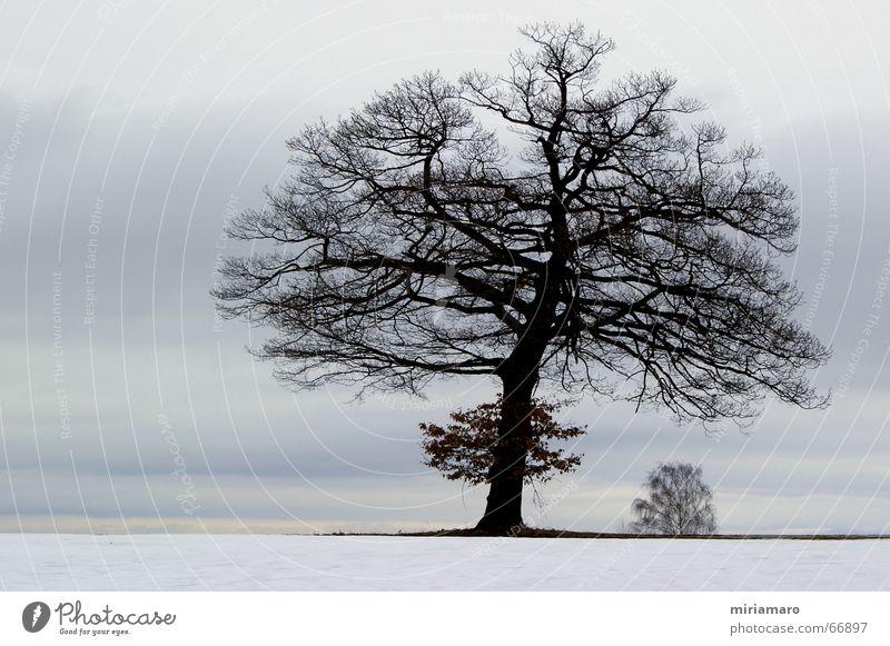 Blätterlose Schönheit Natur schön Baum Pflanze Winter ruhig Schnee Traurigkeit Landschaft Eis Stimmung Frost Romantik Sehnsucht Baumkrone Eiche
