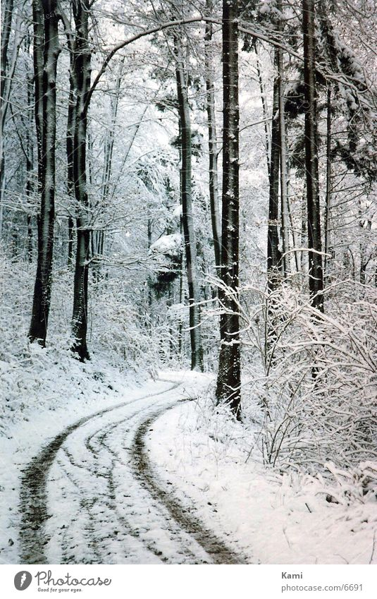 Wald Weg Winter Baum Winter Wald Schnee Wege & Pfade