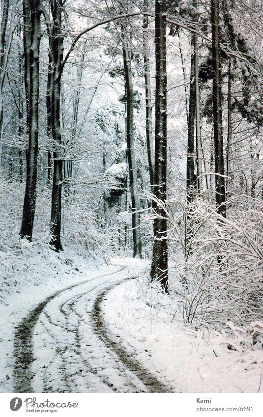 Wald Weg Winter Baum Schnee Wege & Pfade