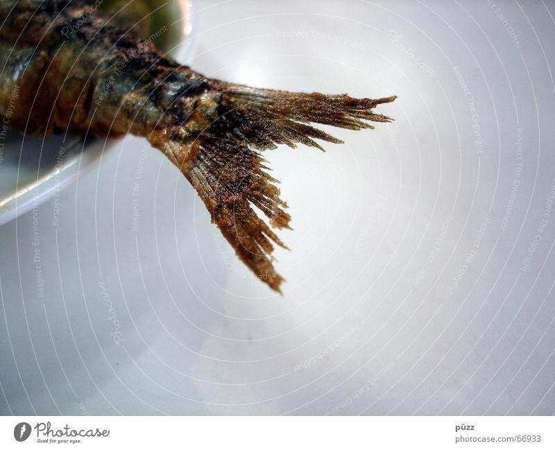 Sardine Lebensmittel Fisch Ernährung Teller Restaurant lecker Sardinen Spanien Schwanz Schwimmhilfe Flosse Schwanzflosse Farbfoto Gedeckte Farben Innenaufnahme