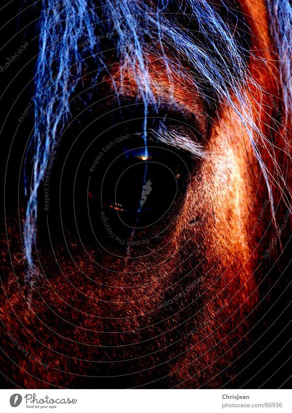 no.32 Tier Farbe Auge Haare & Frisuren träumen Pferd falsch extrem Mähne bearbeitet Wunschtraum Pferdeauge
